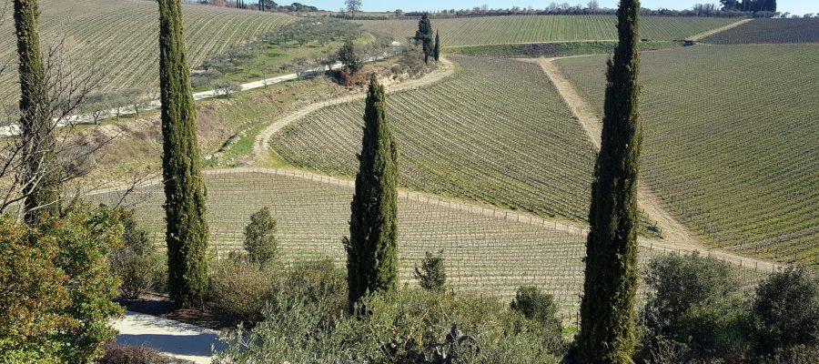 la vigne ad anfiteatro