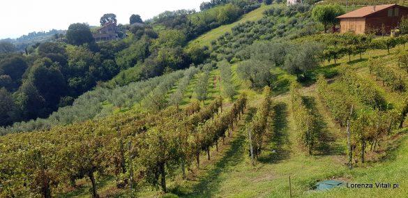 Monte di Livio a Colceresa
