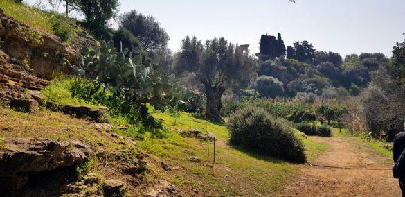 Il Parco della Valle dei Templi